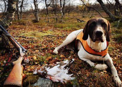 Koira riekkoja jahtaamassa_LAP_Adventures