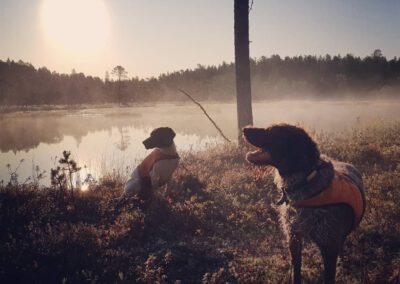 Koirat metsällä syyskuussa 2019_LAP_Adventures
